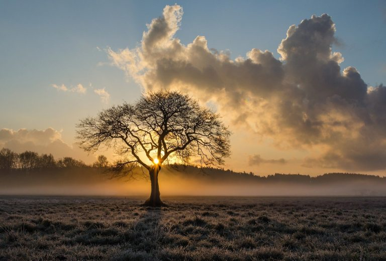 Een boom en nog een boom